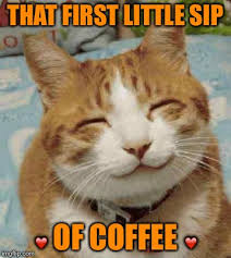 Funny Cat Meme - image tagged in cats cat cute cat funny cats smiling cat funny cat