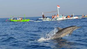 lovina beach offers the beauty of dolphins u0027 attraction vacation