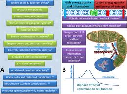 the quantum mitochondrion and optimal health biochemical society