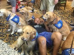 Comfort Golden Retriever Breeders Dog Volunteers Comfort Orlando Shooting Survivors Trudog