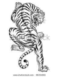 tiger stock images royalty free images vectors