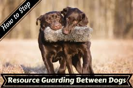 how to train dog to stop barking how to stop resource guarding aggression between dogs