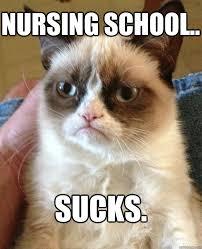 School Sucks Meme - nursing school sucks cat meme cat planet cat planet