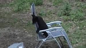 What Is A Lawn Chair Funny U0026 Cute Animals