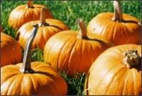 a thankful thanksgiving devotional