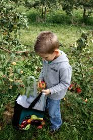 92 best apple picking images on pinterest apples apple harvest