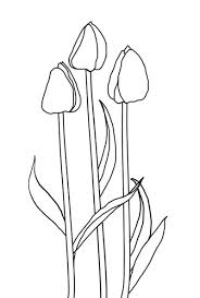 tulip coloring pages netherlands flag coloring page iris