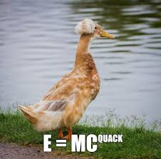 Best Memes 2014 - best memes 2014 quackstein