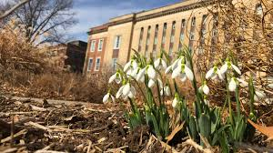 nebraska native plants is spring springing early in nebraska nebraska today