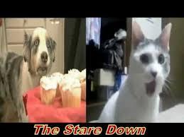 Omg Cat Meme - omg cat vs stains the cupcake dog youtube