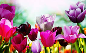 beautiful flowers spring wallpaper 30356 wallpaper download hd