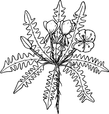 outline drawing of a forest flower free image