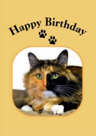 88 best cat birthday cards images on cat birthday