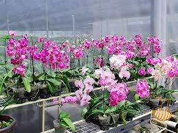 ornamental plants orchids how to plant grow and care for orchids