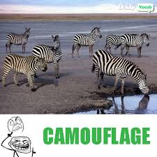 Meme Meaning And Pronunciation - camouflage meaning in hindi with picture dictionary