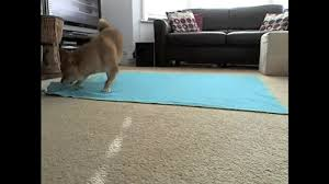 Funny Area Rugs Gifs 8 Decorating Don U0027ts That We U0027re All Guilty Of Dog Animal