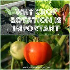why crop rotation is important u2013 home garden joy