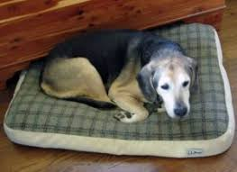dog nesting bed best indestructible dog beds in 2018 chew proof tough durable
