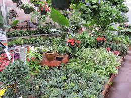 houseplants succulents cacti and air plants garden barn