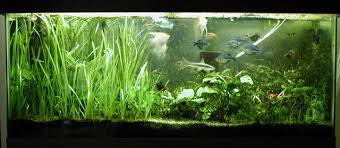 55 gallon aquarium light 55 gallon planted tank