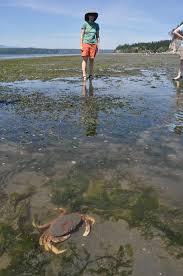 Puget Sound Tide Table Trails U0026 Tides Tristan Baurick The Kitsap Sun U0027s Environmental
