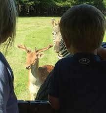 Mississippi Wildlife Tours images Mcclain safari park one of the best wildlife attractions in jpg