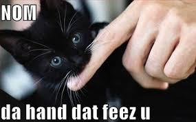 Mad Cat Memes - funny lol cat meme 4