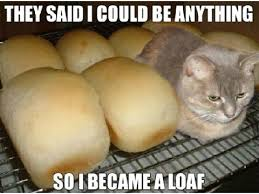 Loaf Meme - scratch search