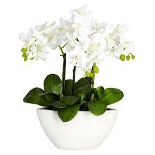 flowers arrangement nearly phalaenopsis silk flower arrangement target
