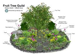 plant a fruit tree guild the resiliency institute