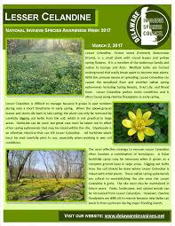 what is a non native plant delaware invasive species council inc protecting delaware u0027s
