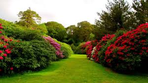 flowers garden home decoration ideas designing top on flowers