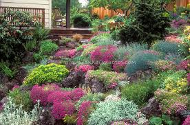 Rock Gardens On Slopes Garden With Dianthus Rocks Hillside Plant Flower Stock