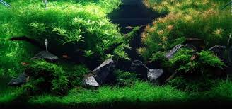 Aquascape Design Aquascape Design