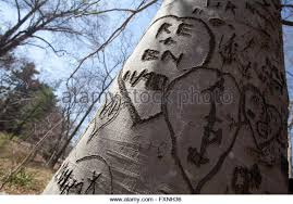 initials carved in tree initials carved on tree stock photos initials carved on tree