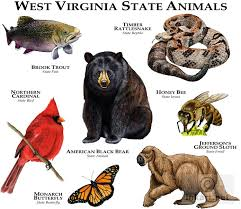 state bird of south dakota state animals of west virginia line art and full color illustrations