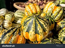 farm to table concept colorful winter squashes farmers market background stock photo