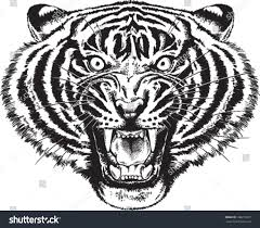 black white vector sketch angry tiger stock vector 168271301