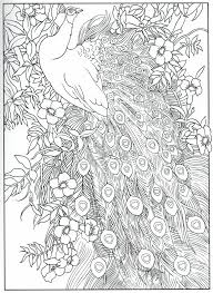 feathers coloring page kids coloring