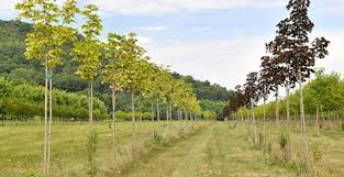farmers soon to claim ownership of commercial trees