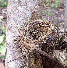 ecological relationship wikipedia