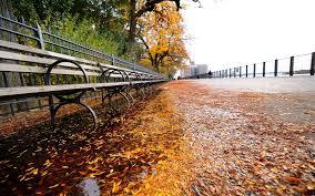autumn nature tree leaves hd desktop wallpapers 4k hd