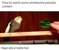 Meme Bird - 10 bizarre and funny bird memes that you need to see right now