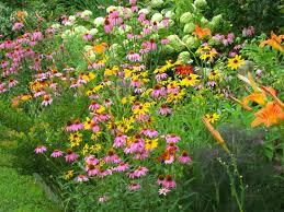 to attract butterflies butterfly garden design ideas