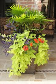 lush tropical containers u2013 garden soiree