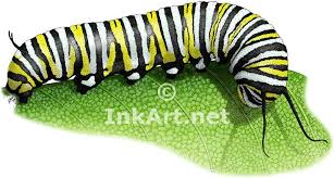monarch butterfly caterpillar stock illustration