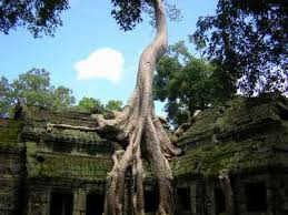 ta prohm temple in the morning