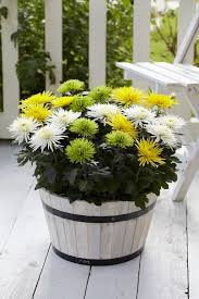 19 best plants for home and garden images on pinterest plant