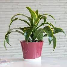 35 best my indoor plants images on pinterest indoor house plants