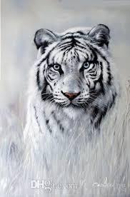 2018 white tiger blue big cat portrait endangered species